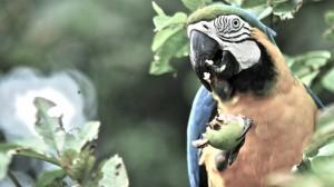 macaw_1-943x531