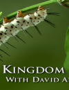 kingdom-of-plants-banner