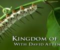 kingdom-of-plants-banner
