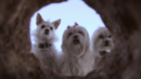 The Three Dogateers (DVD) – Movie Review