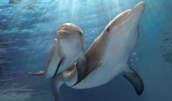 Home Release – Dolphin Tale 2